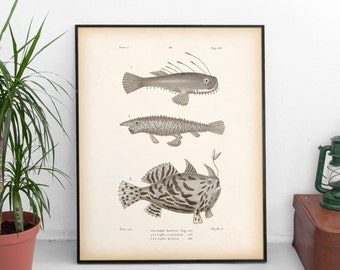 Antique print, Fish wall art, Vintage fish print, Nautical wall art, Fish printable, Instant download print, Art print, 8x10, 11x14, JPG