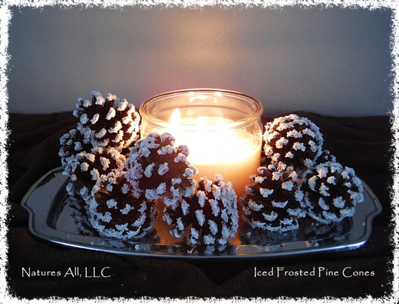 Iced Frosted Pine Cones/Winter Decor/20 Piece Box/For Rustic Winter Home Décor/Shipping Included: Item# IFPC-1000