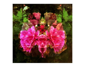 Abstract Floral Art, Square Photography, Surreal Nature Art, Flower Wall Decor, Experimental Photography, Large Square Print, Roses