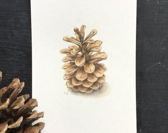 Pinecone - original drawing