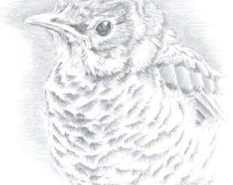 Original Art Red Robin Drawing Bird Art Fledgling Art Wildlife Art Silverpoint Drawing Framed Art Metalpoint Drawing Bird Lover Gift