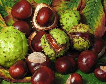Chestnut Extract - 1, 2 or 4 oz size - Natural Dye - Natural Tannin