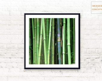 Tropical Print ~ Large Wall Art ~ Green Decor ~ Printable Poster ~ Tropical Photo ~ Digital Download ~ Modern Decor ~ Asian Decor ~ Wall Art