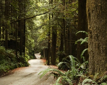 Wanderlust forest Photography | Large Wall Art Print | Fern Cayon Photography | Lost Coast photography | Redwood forest | California Forest
