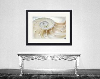 Nautilus - Nautilus Shell Ocean treasury Beach treasury Ocean love Love ocean Beach house decoration Beach bum Fine Art Print 8x10