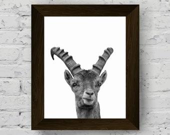 capricorn wall art, nursery poster, black white animal photography, woodland animal print, animal wall art, printable art, digital download