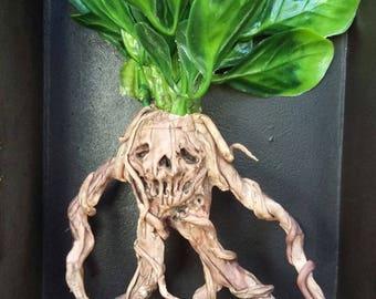 Framed Mandrake #1 (Skull mandrake) / OOAK