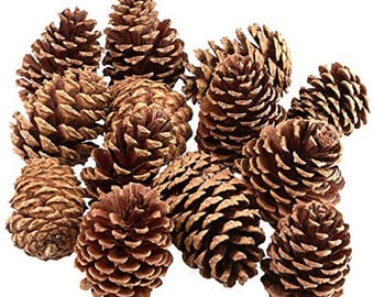 Organically Grown Natural Pine Cones - 1 pound