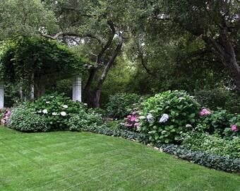 Hydrangea Photo, 5x7 Photo, Santa Barbara Photo, English Garden Photo, California Garden Photo, Plant Photo, Pink Hydrangea