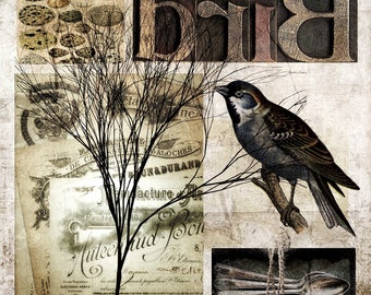 Bird - digital collage fine art photography