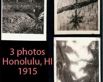 vintage photo 3 Hawaiian Island palm trees rice fields honolulu