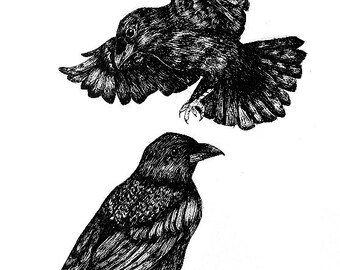 Raven in mind - original drawing