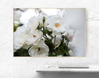 Flowers, White, Roses, Bee, Plants, Earth, Photography Digital file, Download, Nature Photography, Stock, Printable art