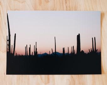 Saguaro Sunset Print