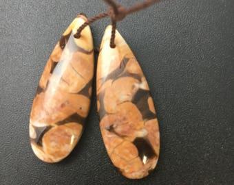 Petrified Peanut Wood Slices, Teardrop matched pair, drilled pendants, stone slabs, stone tablets