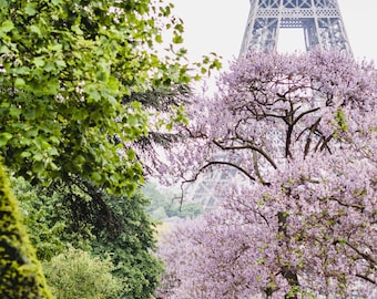 "Paris, France Travel Photography, ""Eiffel Tower Blossoms"", Gallery Wall Art Prints, Home Decor"
