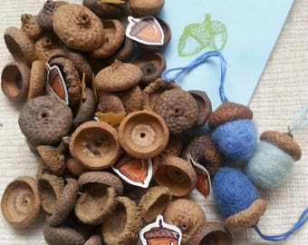 Sixty Drilled Natural Oak Acorn Tops Drilled Hole Needle Felting Wool Craft Supply