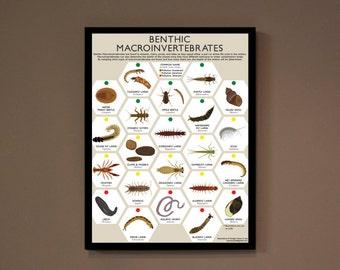 "Macroinvertebrate Insect Poster Print- Environmental Education, Stream Health 18x24"" *TYPO=BIG DISCOUNT"