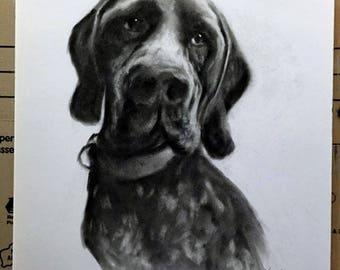 Pet portrait, dog portrait, pencil pet portrait, custom pet portrait, hand drawn portrait, pet drawing, dog drawing, shoty haired pointer