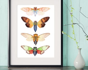 Cicada watercolor painting print, insect wall art, cicadas watercolour