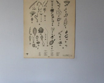 Vintage Seed Dispersal wall chart from Turtox