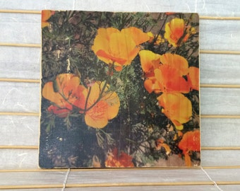 "Springtime Golden Poppies, California - 7""x7"" Square Distressed Photo Transfer on Wood"