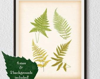 Vintage fern print, Fern illustration, Antique fern print, Digital download print, Printable botanical, Antique botanical illustration, #73