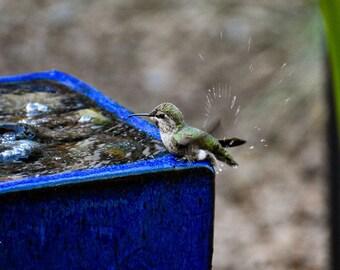 Bird, animal photography, closeup, hummingbird