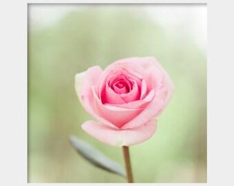 Rose Wall Art, Soft Floral Decor, Pink Rose Photograph, Pastel Pink Green, Pale Pink Floral Art, Cottage Chic Art, Feminine Decor, Girly Art