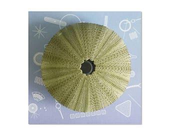 LED mini lamp / green sea urchin