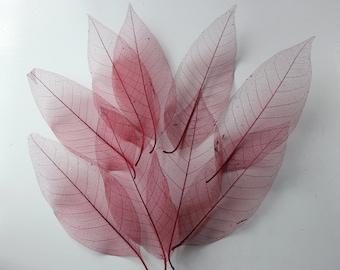 75 pc Beautiful Preserved Dried Skeleton Leaves Red Autumn Wedding Cottage Shabby Decor Botanical Wholesale Craft Leaf