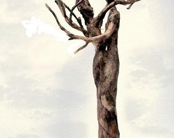 enduring - tree couple print