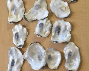 "50 flat Side Oyster Sea Shells Small Shiny Craft Art Clean No Smell 2-3.4"" wedding"