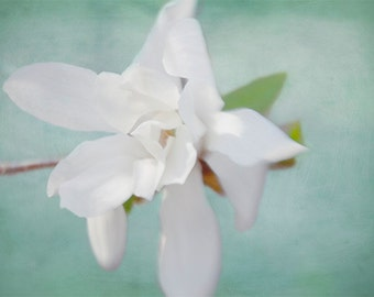 White Magnolia Print, Fine Art Photography Flower, Wedding Shower Gift, Flower Photo, Teal Print, Cottage Chic Wall Decor,