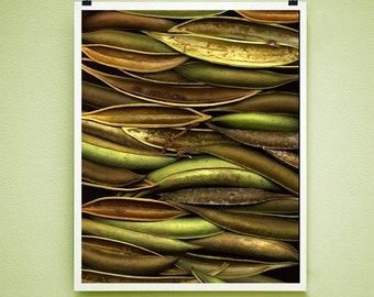 TRUMPET PODS - 8x10 Signed Fine Art Photograph