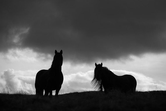 Black And White Horse Art Photography