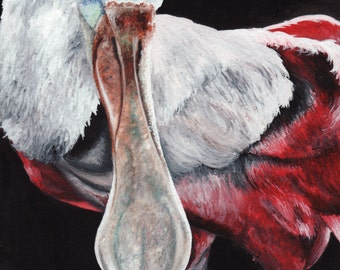 Limited Edition Print of Original Spoonbill Watercolor Painting