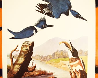 "Belted Kingfisher Print - Audubon Folio Collection - Alcedo Alcyon - 17""x14"" Sheet - Original - 1950s - Vintage Bird Prints - Animal Art"
