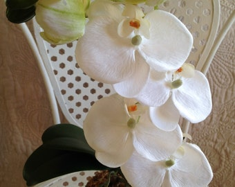 Potted White Phalaenopsis Orchid