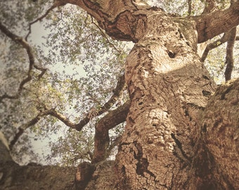 Tree Photography, California Live Oak, Nature Art,  Live Oak Tree Woman, Woodland Woman, Dryad Tree Art, Trabuco Canyon, California photo