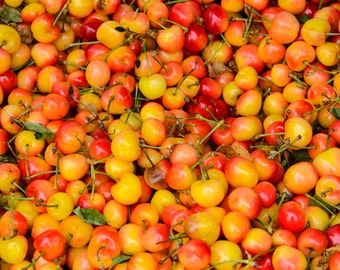 Food Photography - White Cherries - Farmers Market - San Francisco, CA - Fine Art Photograph - Kitchen Wall Art