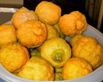 5 African Rough Lemon Tree Seeds-1361