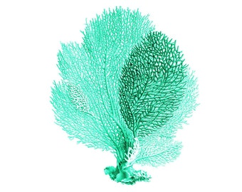 Sea Fan Coral Mint Green Nautical Art Print Natural History Beach House Decor Aqua