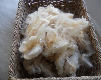 """8 oz Lamb--5""""-7"""" Raw Wool, Unwashed Fleece, Bright White, Tight Crimp 3rd Place in fair, Gorgeous Fleece"""