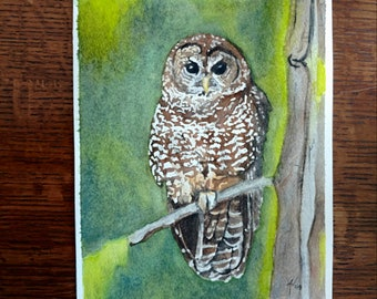 Northern Spotted Owl Fine Art Giclee Print