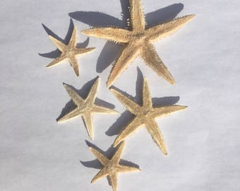 Tan Starfish Set of 10