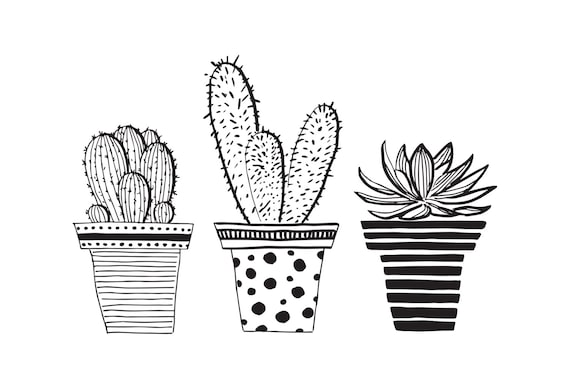 Line Drawing Cactus : Three sweet potted cactus pen drawing illustration