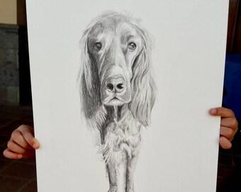 SALE Original dog pencil illustration - Irish Setter illustration 29.7 x 42 cm