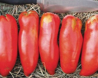 Organic Red Banana Tomato Seeds Greek Heirloom Mid-Season Vegetable Seeds Permaculture Garden Grow Your Own Food (50 Seeds)