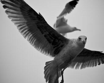 Bodega Bay Birds
